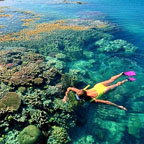 4 Day Package - Reef, Balooning, Rafting  & Daintree