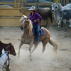 REAL AUSSIE STOCKMEN DEMONSTRATE HORSEMANSHIP SKILLS