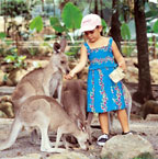 HAND FEED KANGAROOS