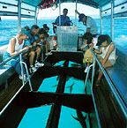 TAKE A GLASS BOTTOM BOAT TOUR