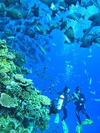 Cairns BEST dive sites