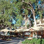 Palm Cove Restaurants