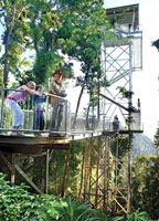Mamu canopy decking made from recycled plastic