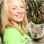 OPTION TO CUDDLE A KOALA