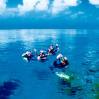 INTRODUCTORY & CERTIFIED DIVES AVAILABLE