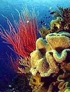 Outer Reef & Kuranda