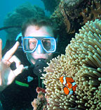 INTO & CERTIFIED DIVING AVAILABLE
