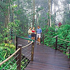 RAINFOREST BOADWALK
