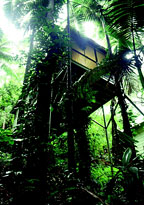 LUXURY RAINFOREST ACCOMMODATION