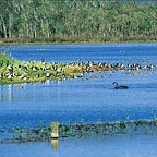 Hasties Swamp National Park