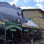 big barrramundi at daintree village