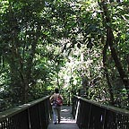 elevated rainforest boardwalk