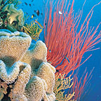 WALLS LACED WITH GORGONIAN FANS