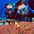 CLOWNFISH & ANEMOME LIVE IN MUTUAL RELATIONSHIP