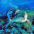 SIX OF SEVEN SPECIES ARE FOUND ON THE GREAT BARRIER REEF