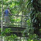 elevated boardwalks