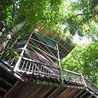 the canopy tower