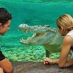 goliath the resident croc