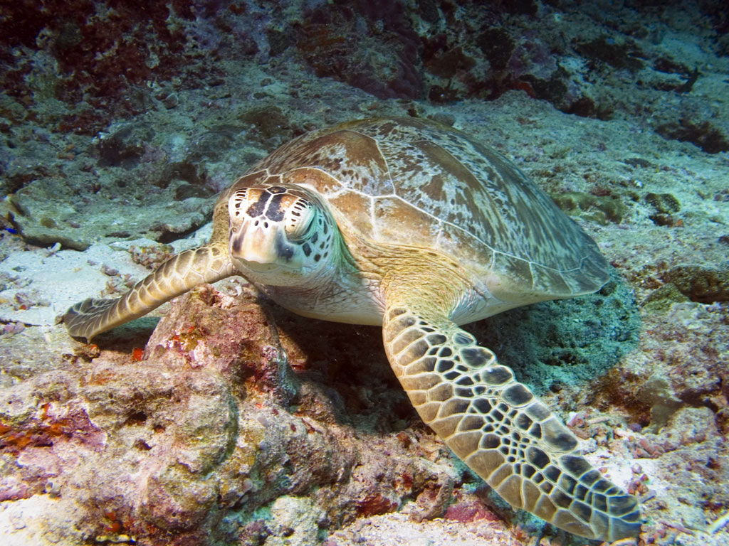 DECLINE IN TURTLE POPULATIONS