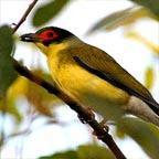 MORE THAN 430 BIRD SPECIES