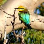 GLIDE WITHIN METRES OF BIRDLIFE