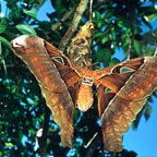 MANY BUTTERLIES BLEND INTO THE RAINFOREST