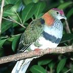 DIVERSE LOCAL BIRDLIFE