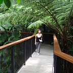 RAINFOREST WALKS