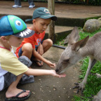 FEEDING A CUTE KANGAROO