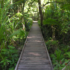 BOARDWALK THROUGH SWAMP FOREST