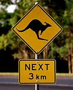KANGAROO CROSSING ON THE WAY TO MAREEBA