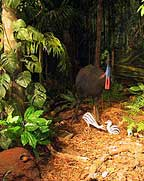 CASSOWARY DISPLAY AT THE HERITAGE MUSEUM