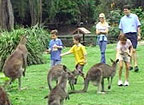 FEED THE KANGAROOS