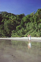 DAINTREE BEACHES