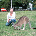 THE FRIENDLY KANGAROO