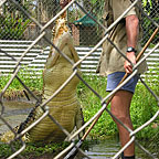 JOHNSTONE CROC FARM