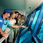 underwater observatory on the great adventures pontoon