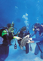 introductory diving on reef magic