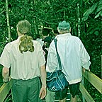 TRACK TO THE DAINTREE RIVER