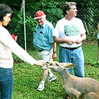 KIKO FEEDING A KANGAROO