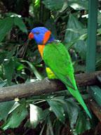 75 species