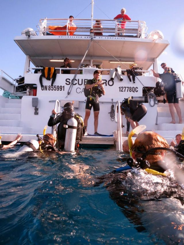 Things to do in cairns view and compare all day padi 3 - Pro dive cairns ...