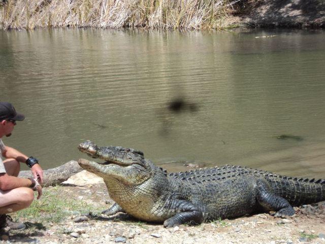 Palm Cove Beach Crocodiles