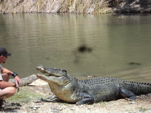 Cairns Info Com Hartley S Crocodile Adventures Cairns