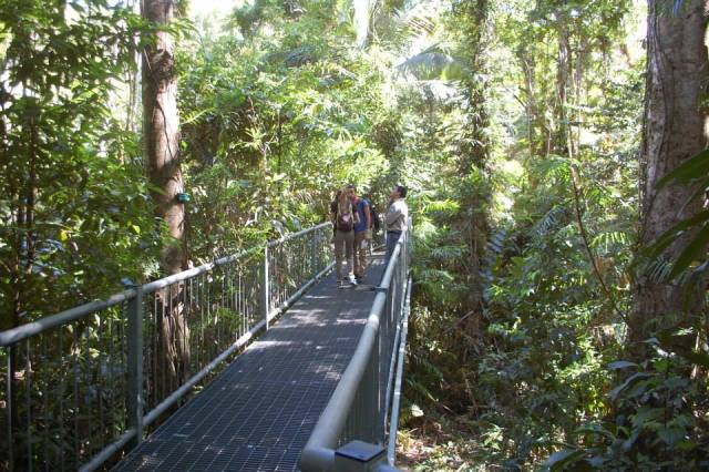 Daintree Discovery Centre Gallery- HIDE & Daintree Info.com - Daintree Discovery Centre - Local Advice ...