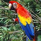 EXOTIC BIRDS AT BIRDWORLD
