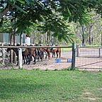 located 35 minutes west of cairns