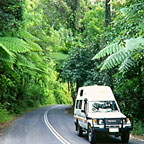 THE DAINTREE RAINFOREST IS A 2 HOUR DRIVE NORTH OF CAIRNS