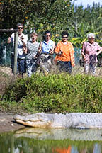 VISIT THE CROCODILE PARK