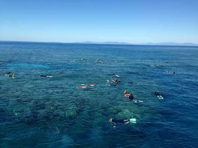 cairns reef day tours reef experience  inclusive